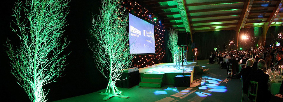 Whole birch trees used on stage as decorations photo 6