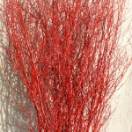 Birch twigs painted red